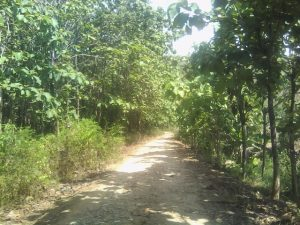 Jalan di Desa Sumbersari Kayen ini Lebih 30 Tahun Tak di Aspal
