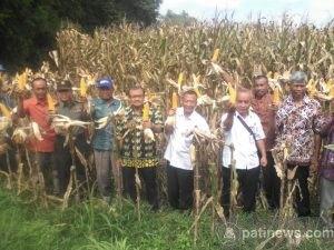 Farmers Field Day Untuk Pengembangan Komoditas Jagung