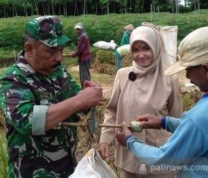 Sinergitas Babinsa, PPL dan Warga Desa Tamansari Tlogowungu Dalam Upsus Pertanian