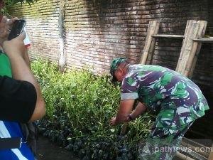 10.000 Bibit Mangrove Bakal Ditanam Di Pesisir Dukuhseti