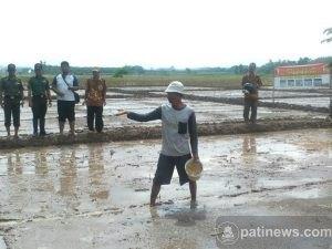 Launching tanam Serentak Pola Tasela (Tanam Sebar Langsung)
