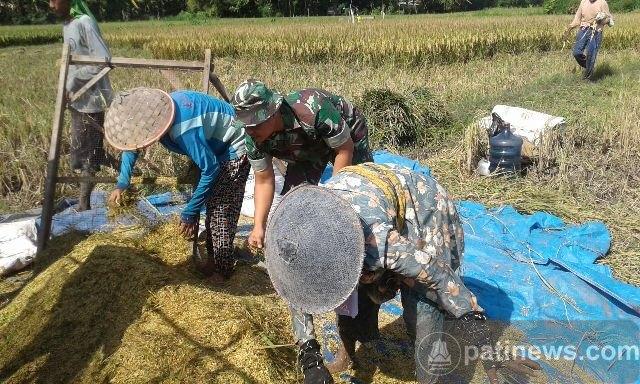 Ini Peran Aktif Anggota Koramil 01 Pati Di Bidang Pertanian