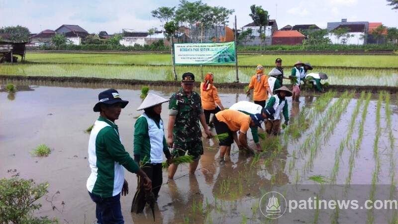Temu Lapang Pada Farm Field Day Perkuat Produktifitas Pertanian