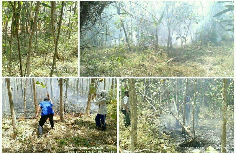 Kebakaran Lahan Jati di Winong,  Dua Unit Pemadam Dikerahkan