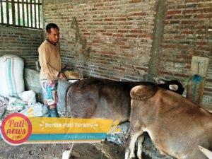 Ampas Ketela Berdampak Bagi Hewan Ternak, Ini Alasannya