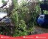 Tiga Mobil Tertimpa Pohon Tumbang di Tambahmulyo Jakenan