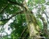 Terkuak, Inilah Cerita Dibalik Bukit Rasamala di Desa Gunungsari Tlogowungu