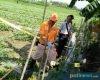 Seorang Petani di Winong Kidul Ditemukan Tak Bernyawa, Diduga Tersengat Listrik