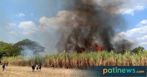 Buang Puntung Rokok Sembarangan, Tiga Hektar Tebu Siap Panen di Winong Terbakar Hebat