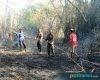 Kebakaran Rumpun Bambu di Tegalwero Pucakwangi, Warga dan Petugas Berjibaku Padamkan Api